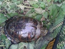 Sonstige: Schildkröte an Stipprute