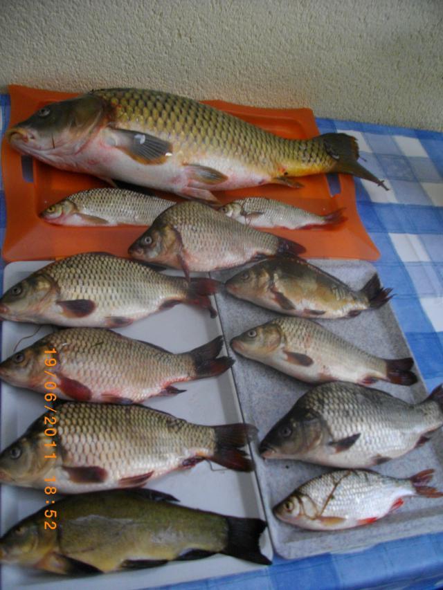 Karpfen: In 6 Sunden gefangen