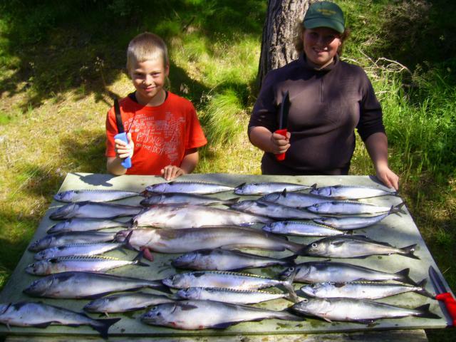 Sonstige: Norwegen-Fische