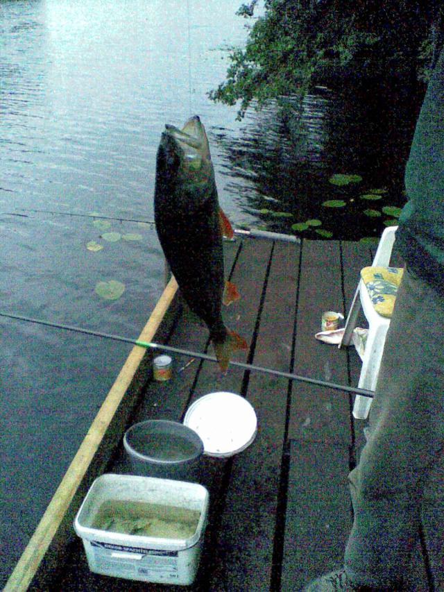Barsch: angeln